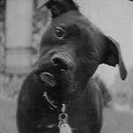 confused-black-dog